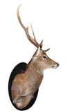 Seven Point Stag Head. Isolated with clipping path royalty free stock images