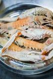 Seven prawns Royalty Free Stock Photo