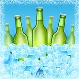Seven realistic mock up green bottle of beer among ice cubes on blue background. Vector illustration three bottle sharp and four bottles depth of field Stock Images