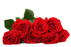 Seven red roses Royalty Free Stock Photos