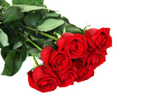 Seven red roses. Isolated on white Royalty Free Stock Photography