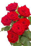Seven red roses Royalty Free Stock Images