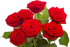 Seven red roses on white Stock Images