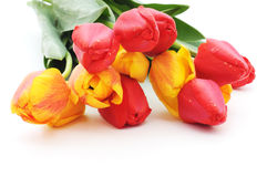 Seven red tulips Stock Photography