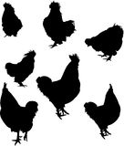 Seven rooster silhouettes Stock Photography
