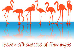 Seven silhouettes of flamingos Royalty Free Stock Images