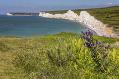 Seven Sisters Chalk Cliffs in East Sussex Royalty Free Stock Photo