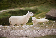 Seven Sisters country park Royalty Free Stock Photo