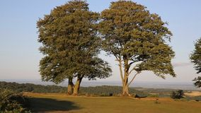 Seven sisters trees Quantock Hills Somerset England UK top of Cothelstone stock video footage