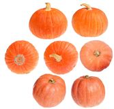 Seven small orange pumpkins on white Stock Photo