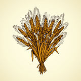 Seven spikelets of wheat. Vector drawing. Whole healthy ripe dry caryopsis plant stalk bundle on white backdrop. Freehand outline golden ink hand drawn logo Royalty Free Stock Photography