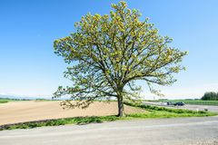 Seven stars tree Stock Photography