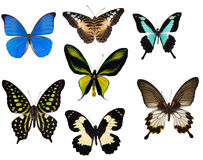 Seven tropical butterflies Royalty Free Stock Photo