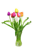 Seven Tulips and Fern Royalty Free Stock Photos