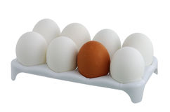 Seven white eggs and one brown in carton Royalty Free Stock Photo