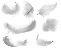 Seven white feathers Stock Photos
