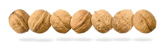 Seven whole walnuts in a row levitating on white background royalty free illustration