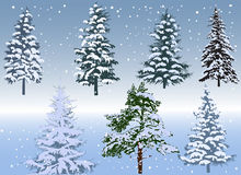 Seven winter firs on blue background Stock Photography