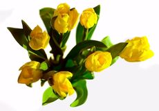 Seven yellow tulips bunch Royalty Free Stock Images