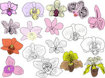 Seventeen orchid blooms collection isolated on white Stock Images