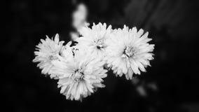 Seventi fred Royaltyfri Foto