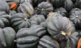 Several Acorn Squash at the farmers market royalty free stock photos