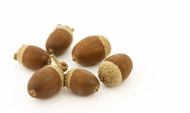 Several acorns Royalty Free Stock Photos