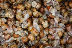 Several alive snails stock images