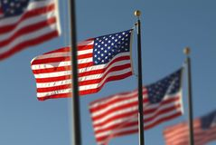 Several American Flags Royalty Free Stock Image