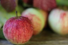 Several apples ripe red with water or rain drops close-up on a wooden table brown/. Several ripe apples red with water or rain drops on a wooden table brown Stock Photo