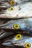 Several asian ribbon fish. Several frozen asian ribbon fish on display Royalty Free Stock Photography