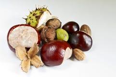 Several autum fruits Stock Photo