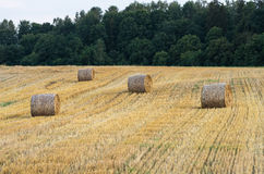 Several bales Royalty Free Stock Photos