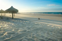 Several beach sun umbrellas at the sunset stock photo