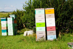 Several beehives in field Stock Photo