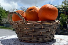 Several biological oranges. Royalty Free Stock Photo