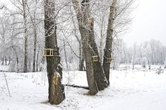 Several bird feeders in the winter forest. Russia royalty free stock images