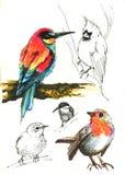 Bird sketch set. Several bird sketch fulcolor, black and white set royalty free illustration
