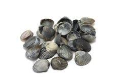 Several black seashells Royalty Free Stock Photography