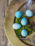 Several blue quail eggs on a large copper tray Stock Photo