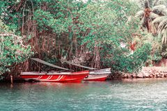 Several boats among the trees royalty free stock images
