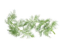 Several branch of dill. Royalty Free Stock Photos