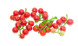 Several branches of cherry tomato on a light background Stock Photos