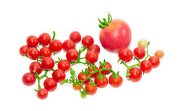 Several branches of cherry tomato and one conventional tomato Stock Image