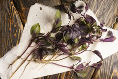 Several branches of fresh basil lie on a white cloth napkin on a. N old wooden table of rough texture. Copy space. Advertising design. Kitchen, restaurant Stock Image