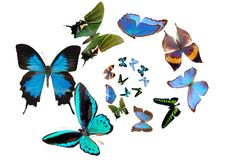 Several butterflies Royalty Free Stock Images