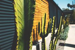 Rustic Cactus background stock photography