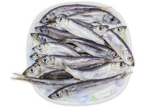 Several capelin on dish Royalty Free Stock Photography