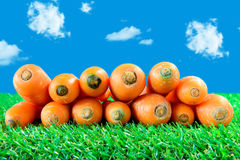Several carrots on green grass Royalty Free Stock Image