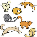 Several Cats Stock Photography